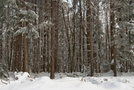 a winter forest close up photo