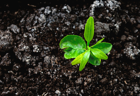 seedling green plant surface top view textured background Stock Photo