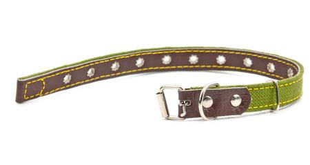 collar: green leather dog collar Stock Photo