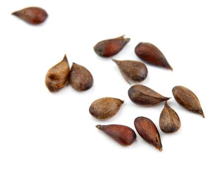 apple seeds on white background Stock Photo - 34187462