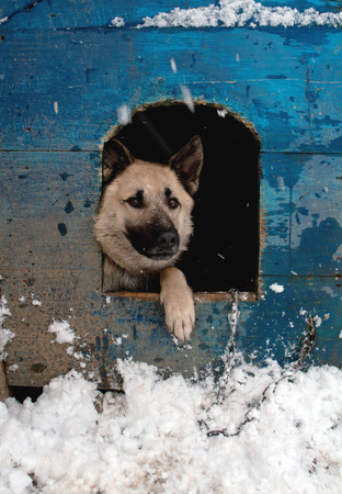 Winter. Sheep dog is in a house Stock Photo - 36186617