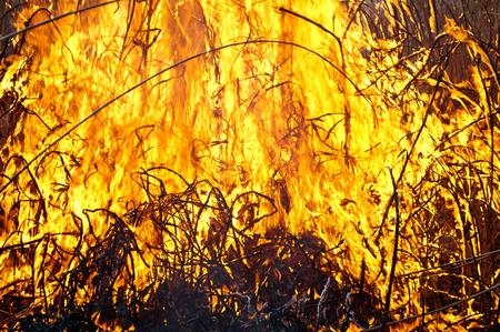 demolish: fire on field close up