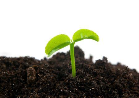 raices de plantas: planta verde sobre fondo blanco aislado