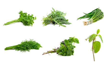 green herbs: green herbs for the kitchen on a white background Stock Photo