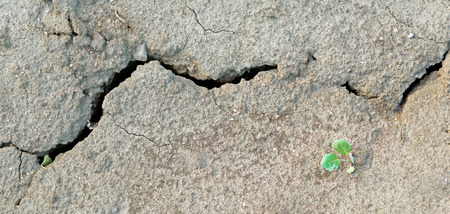 small sprout growing on cracked earth Stock Photo