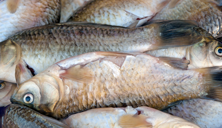 crucian: background of small fish caught in the river crucian carp Stock Photo