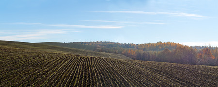 winter wheat: winter wheat on a field Stock Photo