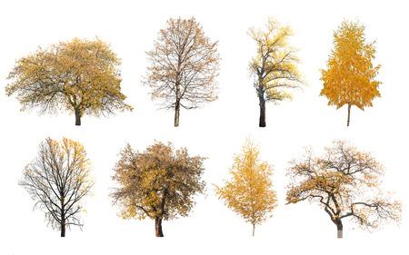 autumn trees isolated on white background