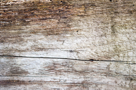 blight: a wood texture close up