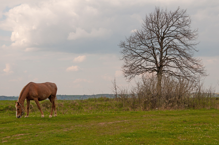 arab spring: horse and field rapeseed close up