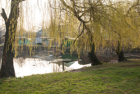 weeping willow: weeping willow trees reflected on a lake Stock Photo