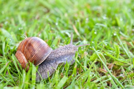 Escargot dans le jardin sur l'herbe Banque d'images - 60730638