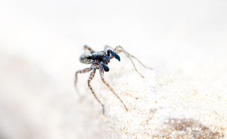 arachnophobia animal bite: spider on the rock
