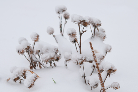 Winter landscape.Winter scene. Frozenned flower