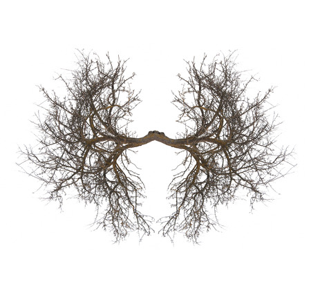tree lungs isolated on white Stock Photo