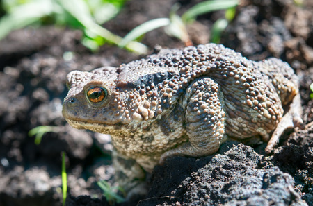 frog grass muzzle wildlife macro