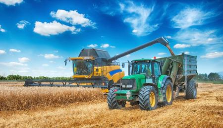 Kombajn zbożowy pracujący na polu pszenicy