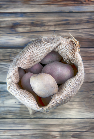 russet potato: harvest potatoes in burlap sack on wooden background