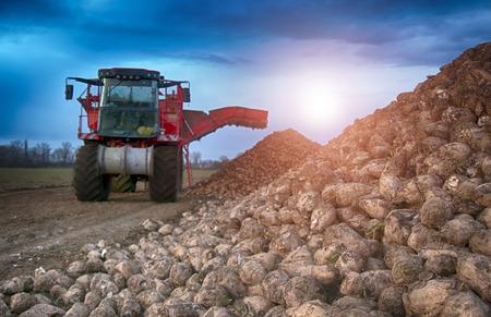sugar beet harvesting machine Stock Photo - 89481577