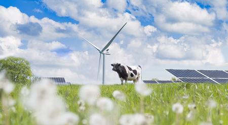 Wind turbine, solar cell and cow on the green grass Zdjęcie Seryjne