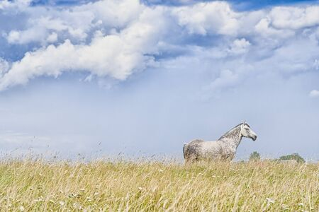 Beautiful white horse on the sky background
