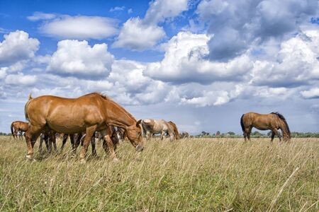 Group of horses eats grass in meadows against a cloudy sky