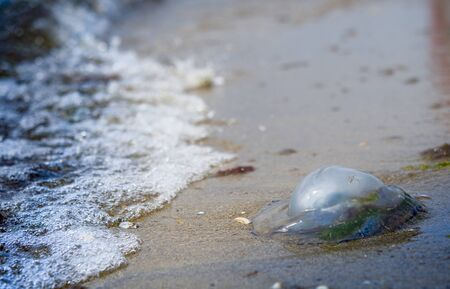 Dead jellyfish on the beach. A close up Stock Photo