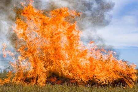 Burning straw stubble farmers when the harvest is complete. Stock Photo
