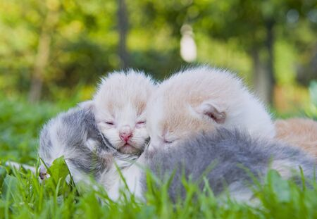 sleeping kittens in green grass. Close up