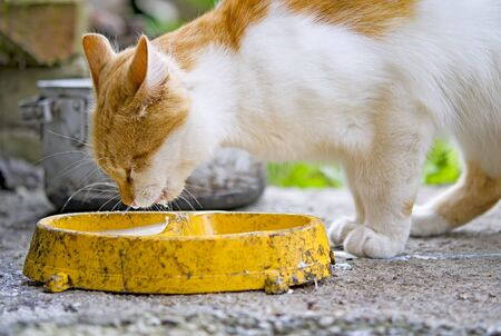 Scene from Ukraine village with close up of a orange kitten  and milk in its whiskers