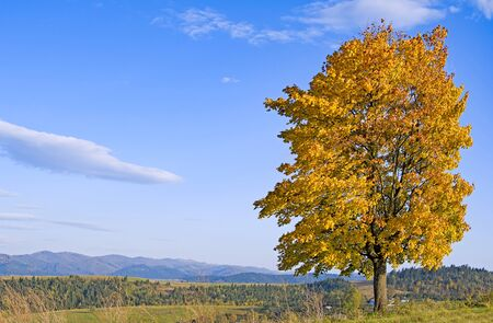 Lonely autumn tree on Carpathian mountainside