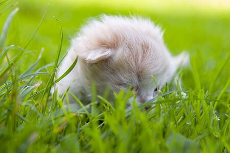sleeping kitten in green grass. Close up Stock Photo