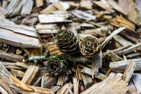 Three Pine cones on Tree bark chips