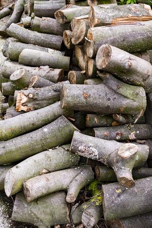 stapled: Some freshly cut firewood stapled