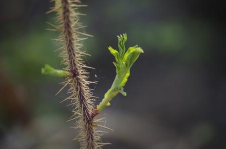leaf Stok Fotoğraf