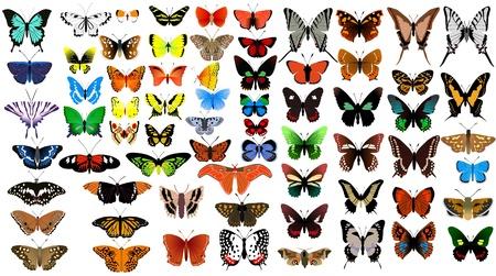 Big vector collection of butterflies Vector