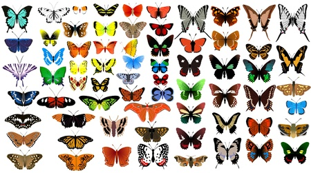 mariposas volando: Vector colección grande de mariposas