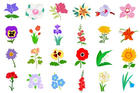 flamy: Set of colored illustration of flowers