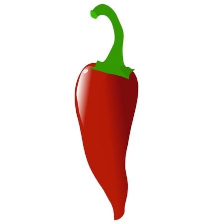 Red hot chili pepper sur fond blanc Vecteurs