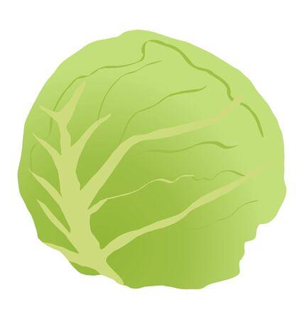 stalk: One green cabbage stalk on white background