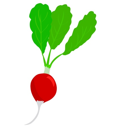 vitamine: One red beet isolated on white background Illustration