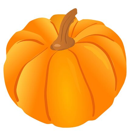 One big pumpkin on the white background Vector