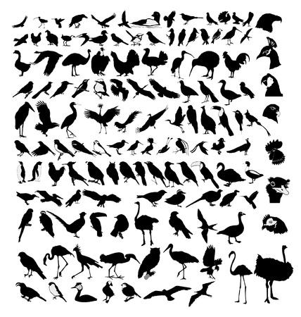 El gran conjunto de las diferentes especies de aves
