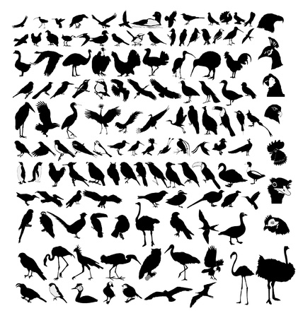 The big set of the different birds Vector