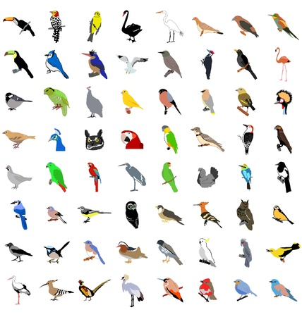 The big set of the different birds Stock Vector - 11234810