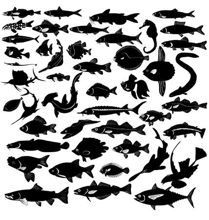 sardine: Die Gruppe von Silhouetten der verschiedenen Fische Illustration