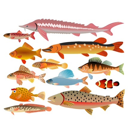 The set of the sea and river fishes Vector