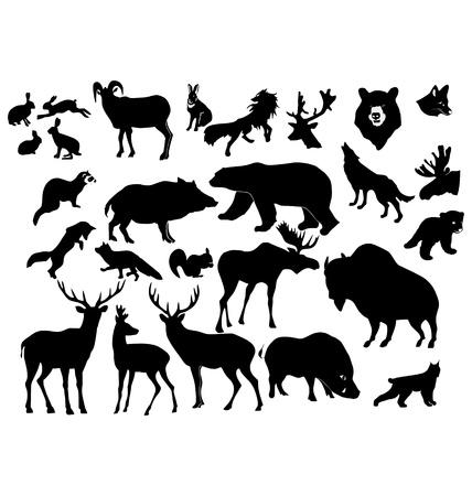 liebre: El gran conjunto de los animales del bosque diferentes Vectores