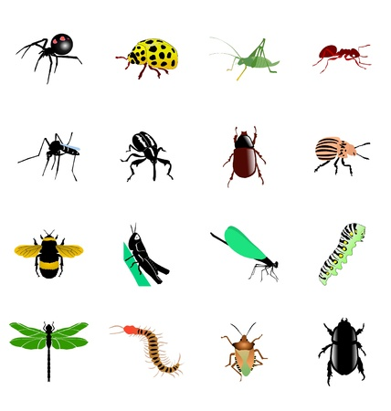 the set of the different kinds of insects and spiders Vector