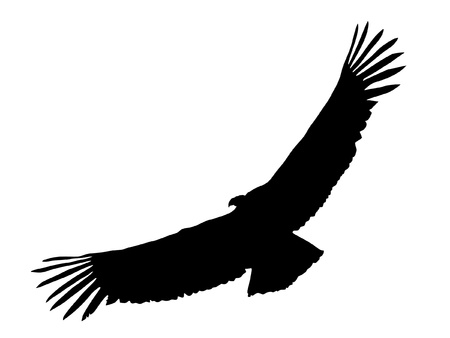 Illustration in style of black silhouette of condor